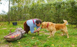 Monty and Nigel with apple harvest